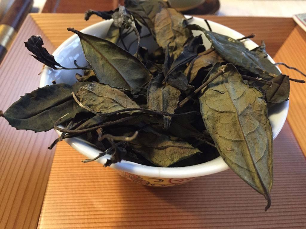 plantaciones de té en Wazuka y Nara