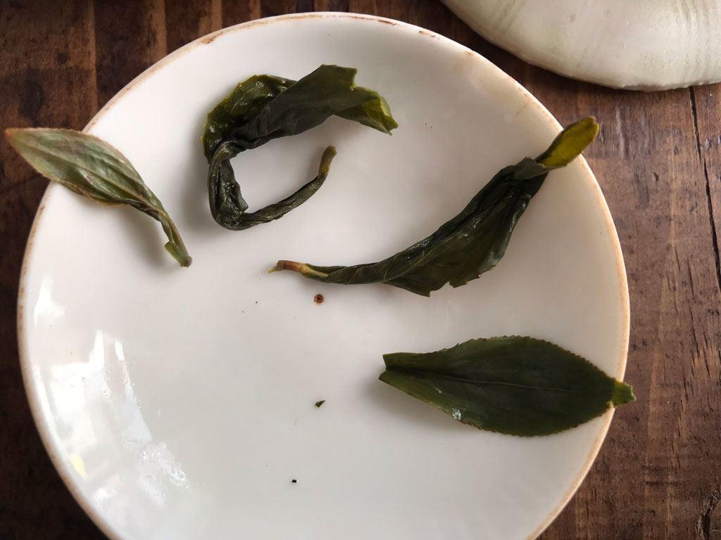 hojas de té abiertas