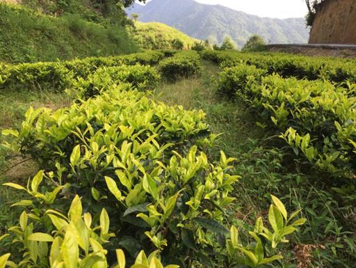 plantación orgánica