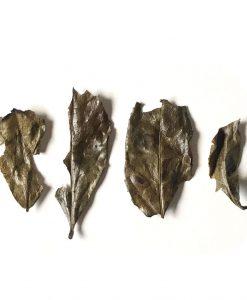 kyobancha