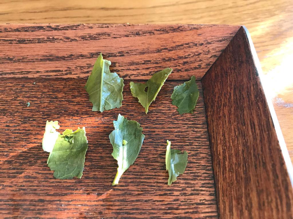hojas del genmaicha 2020